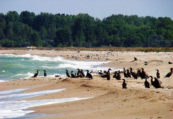 Плаж Шабленска тузла